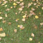 Herbstgebläse